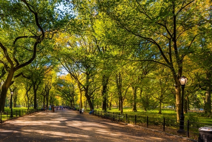 Central Park trees