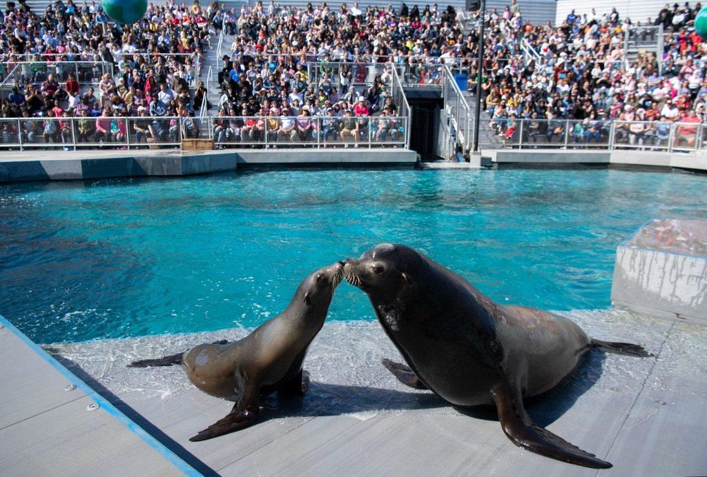 New York Aquarium Aquatheater